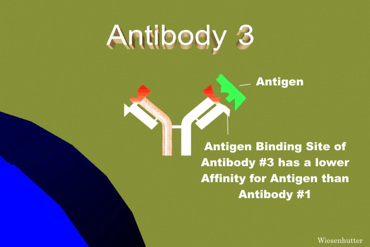 B-cell, Rheumatoid Arthritis Affinity Maturation of Antibodies