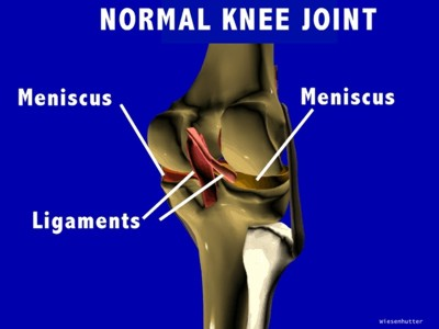Normal Joint Structure of the Knees: Several Views: Slides Images ...